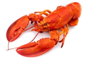 lobster[1]